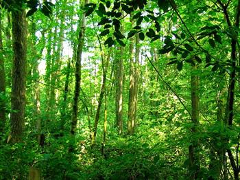 Woodland_1