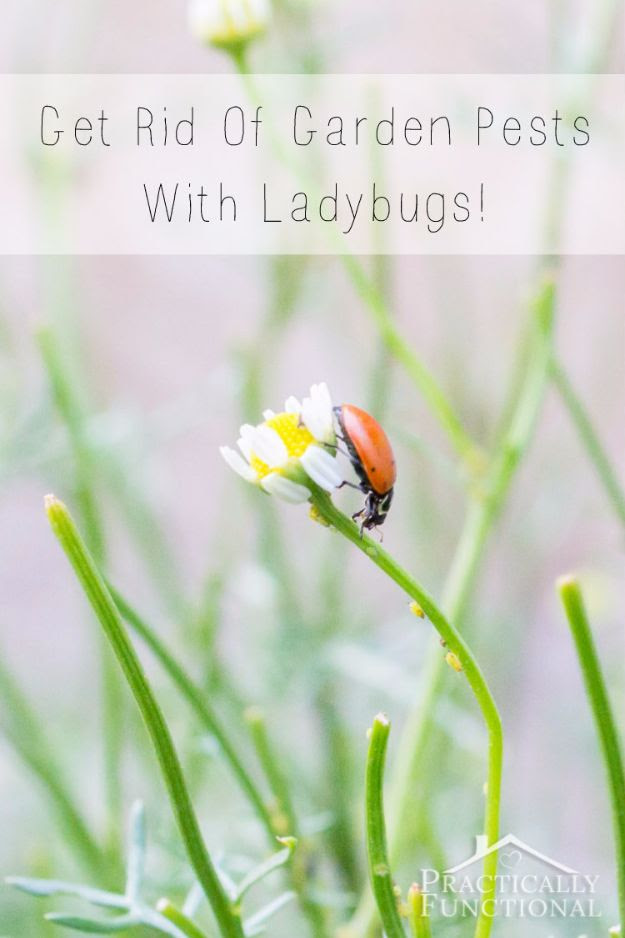 5 DIY Ways to Get Rid of Pests From Your Home