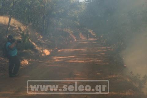Μάχη στις Σκουριές για τα μεταλλεία χρυσού - Πήρε φωτιά το δάσος! [εικόνες+βίντεο]