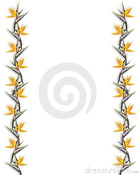 Bird Of Paradise Floral Border Strelitzia Royalty Free