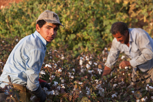 New 'Blue Card' Proposal Would Protect Farmworkers from Deportation | Civil Eats