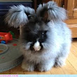 Reader Squee: So Fluffy!
