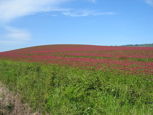 Red Clover Hill on Spring Hill Rd