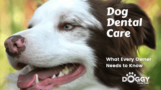 Dog Dental Care Guide Made Easy for the Pet Parent with a Busy Life