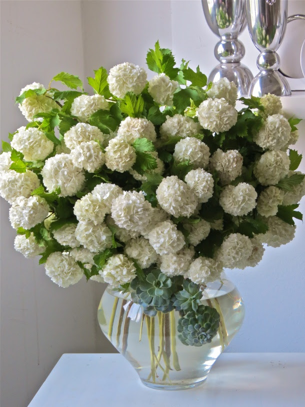Succulents and White Hydrangea in an enormous bouquet!t