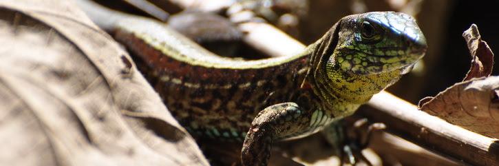 Parc  National de Cahuita