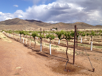 A Guide To Southern Arizona's Wine Country - Forbes Travel Guide Blog