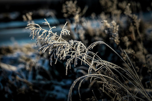 Frosty #i2 by Leif Sohlman