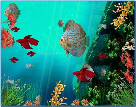 coral reef screensavers wallpaper wallpapersafari