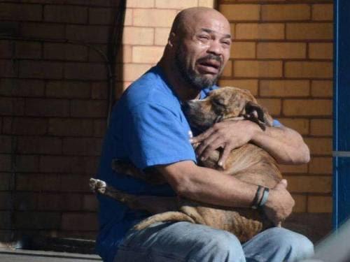 Animals Sad Frases Amor Dogs Accion Poetica Triste Lagrimas Realidad
