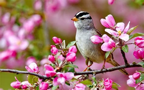 Bird on a blossom branch   spring season