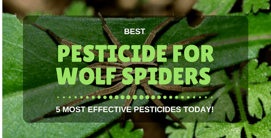 Best Pesticide For Wolf Spiders | 5 Most Effective Pesticides Today!