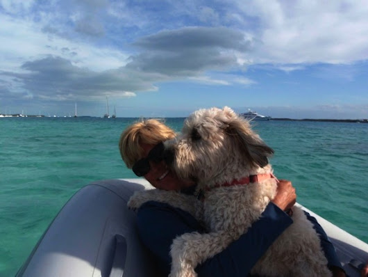 Farley's Friday: A Wheaten in a Dinghy