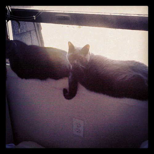 The dummies in the windowsill #Julio #Lester