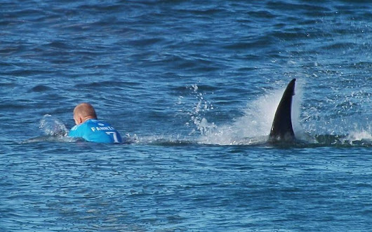3-time surfing world champ fights off shark during South Africa comp