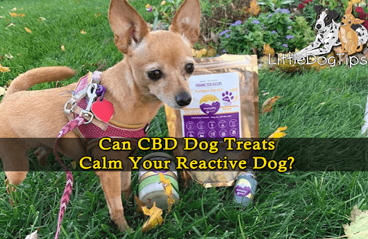 Can CBD Dog Treats Calm Your Reactive Dog? HempMy Pet Giveaway! - Little Dog Tips