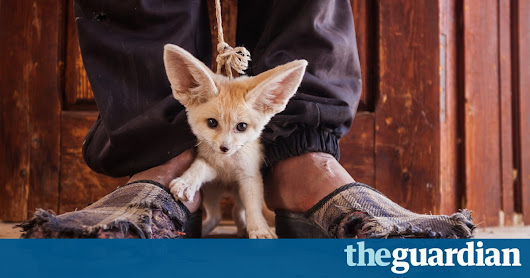 Photographers against wildlife crime – in pictures | Environment | The Guardian