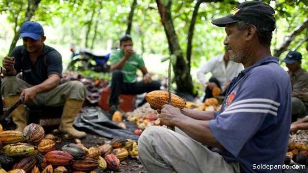 """""""La expansión del cacao en Sudamérica representa una oportunidad importante para lograr una restauración forestal impulsada por la agricultura""""."""