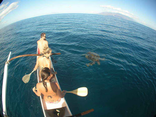 Hawaiian Outrigger Canoe Tours by Hawaiian Paddle Sports