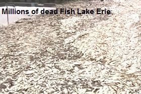 Dead Fish Lake Erie