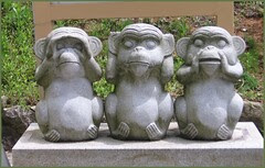 Nagi 09 three different monkeys