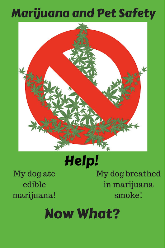Marijuana and Pet Safety - ILoveMyDogMoreThanMyKids