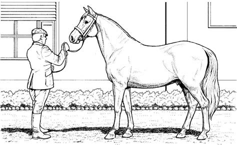 realistic horse coloring printable colouring page coloring