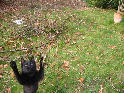 acrobatics: Crow
