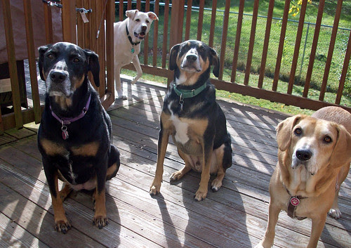 4Dogs_101611