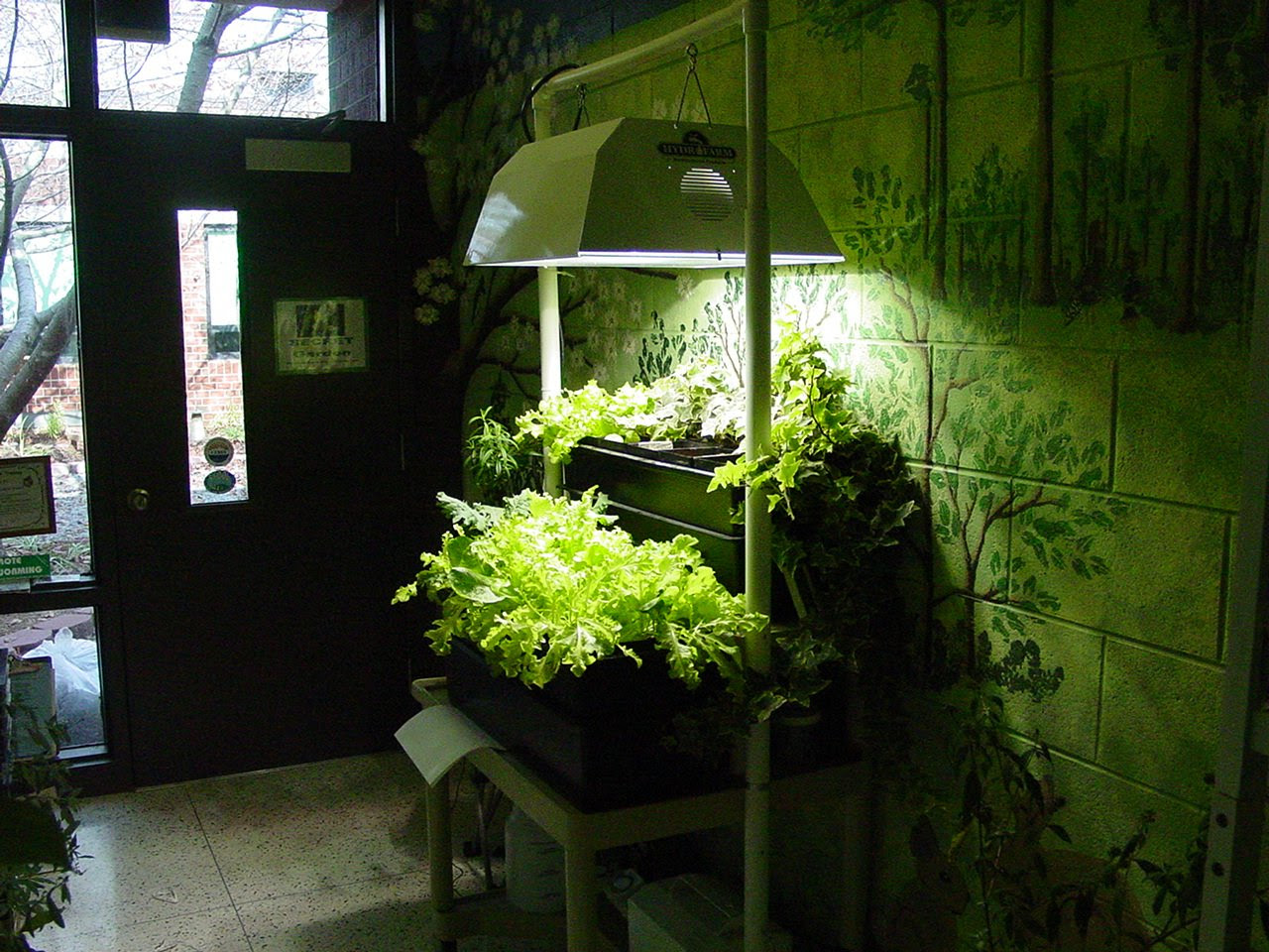 Hydroponics for Beginners  Hydroponics Blog  Hydroponics Articles  Hydroponics Online