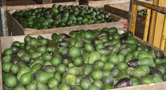 Avocados: Under Review - A Closer Look at Their Nutritional Value. Do They Live up to the Hype?