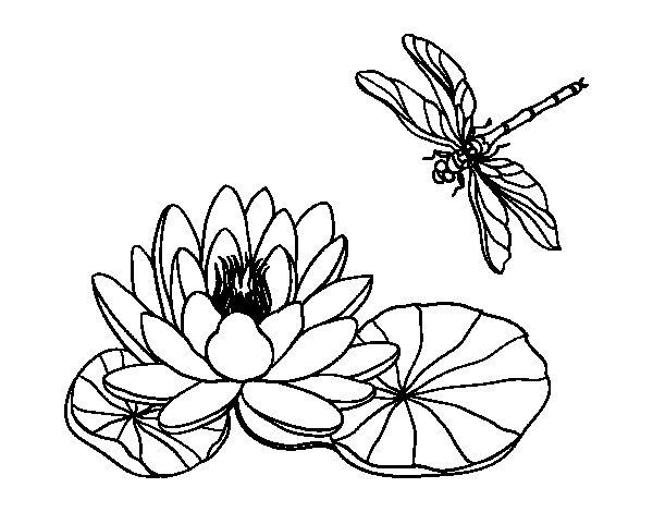 Colorir Flor De Lotus Related Keywords Suggestions Colorir Flor