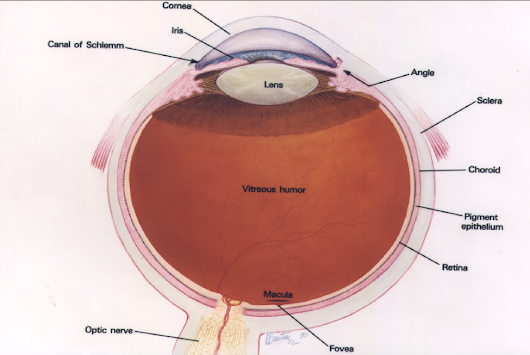 Anti-VEGF treatment of Macular Degeneration: Science-Based Success «  Science-Based Medicine
