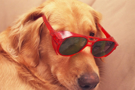 11 Scientific Reasons Dogs Are Better Than Cats | Business Insider