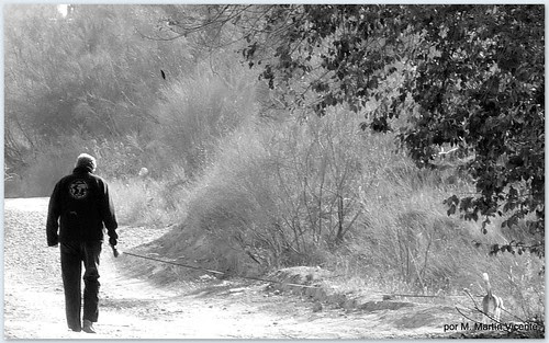 Otoño. Valdemoro, 19 de noviembre de 2009