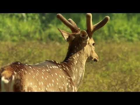 Odisha - An unique destination for nature tourism
