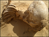 Skull found at Amarna (BBC)