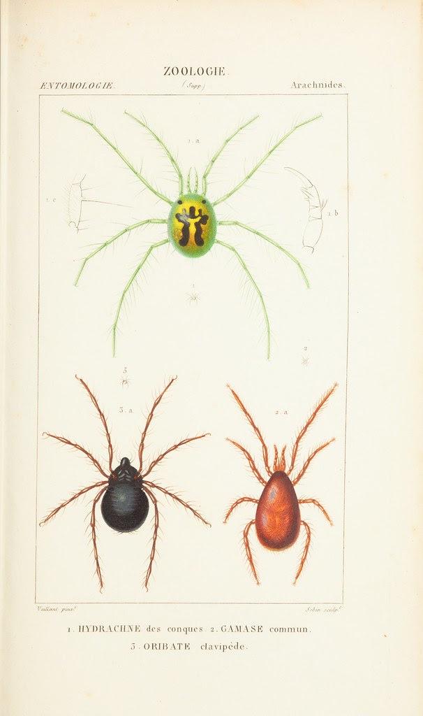 spider species