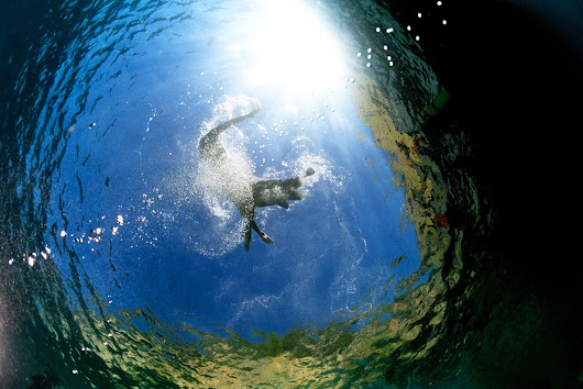 Scuba diving courses - Big Blue Diving