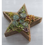 Flower Delivery by 1-800 Flowers Wood Star Succulent Plant