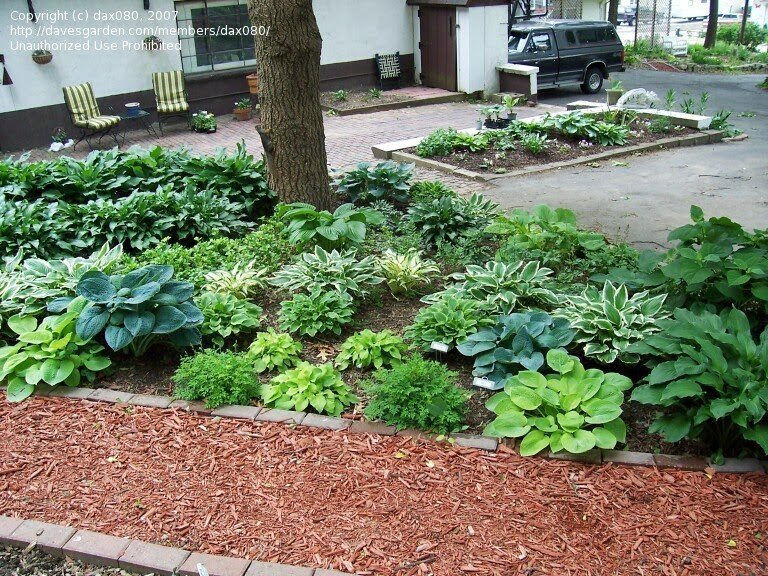 Landscaping Ideas Around Oak Trees Iss Landscaping