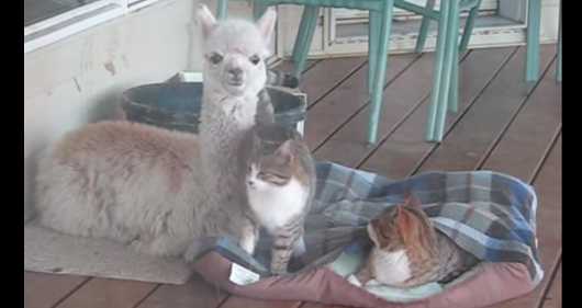 There's An Unlikely Gathering On This Porch Every Morning