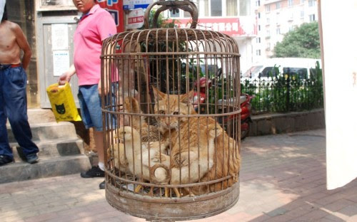 http://24.media.tumblr.com/tumblr_m6y0zdwfut1qzou5ko1_500.jpg