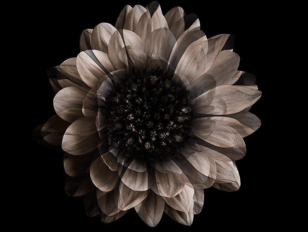 FloraLamp