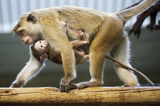 O bebê de cinco semanas não desgrudou da mãe