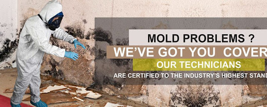 Mold Inspection and Removal Bee Cave — Catstrong (512) 200–7198 Testing, Remediation