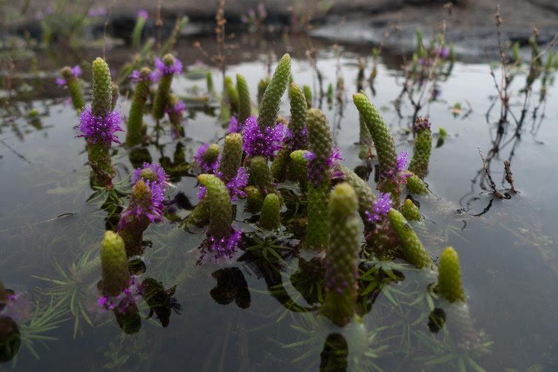 Wildflowers by quasi