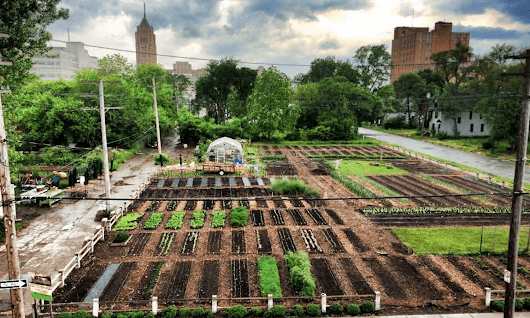 Twelve Organizations Promoting Urban Agriculture around the World – Food Tank