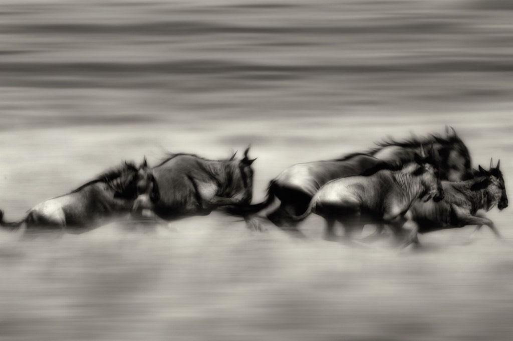 O lado colorido da África selvagem por Alex Bernasconi 12