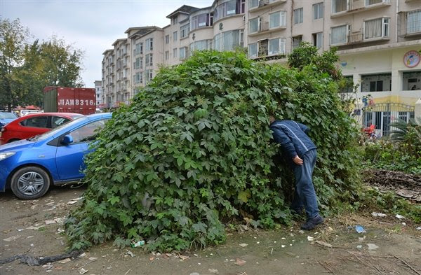 perierga.gr - Εγκαταλειμμένο αυτοκίνητο μεταμορφώθηκε σε… μίνι ζούγκλα!
